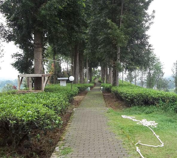 Tempat Wisata di Puncak dan Sekitarnya Taman Riung Gunung