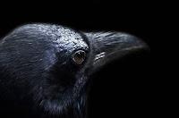 Bird Poetry