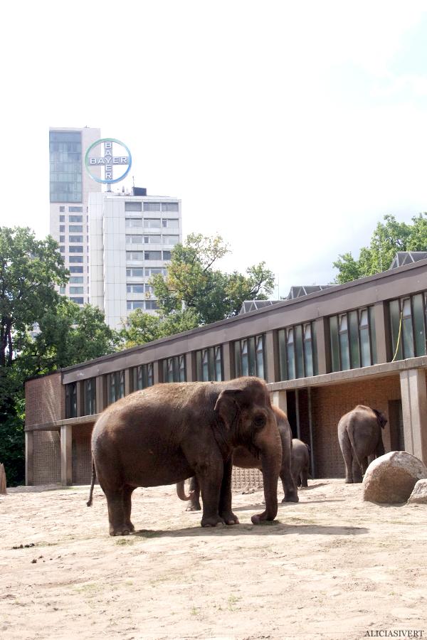 aliciasivert, alicia sivertsson, alicia sivert, berlin zoo, djurpark, djurhållning, instängda djur, djur i bur, cages, animal, animals, cage, elephant, elephants, elefant, elefanter