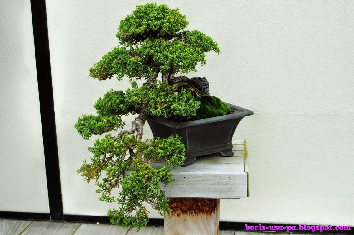 Bonsai Longwood Garden Collection Travel From Philadelphia