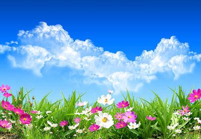 Flores de primavera - Spring flowers - Imágenes para compartir
