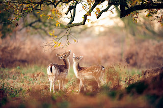 Cute wildlife photography images and cute animals wallpapers free download
