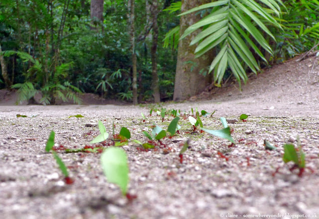 Leafcutter Ants - Tikal National Park, Guatemala