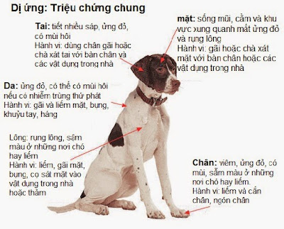Biểu hiện của dị ứng trên các vùng cơ thể chó.