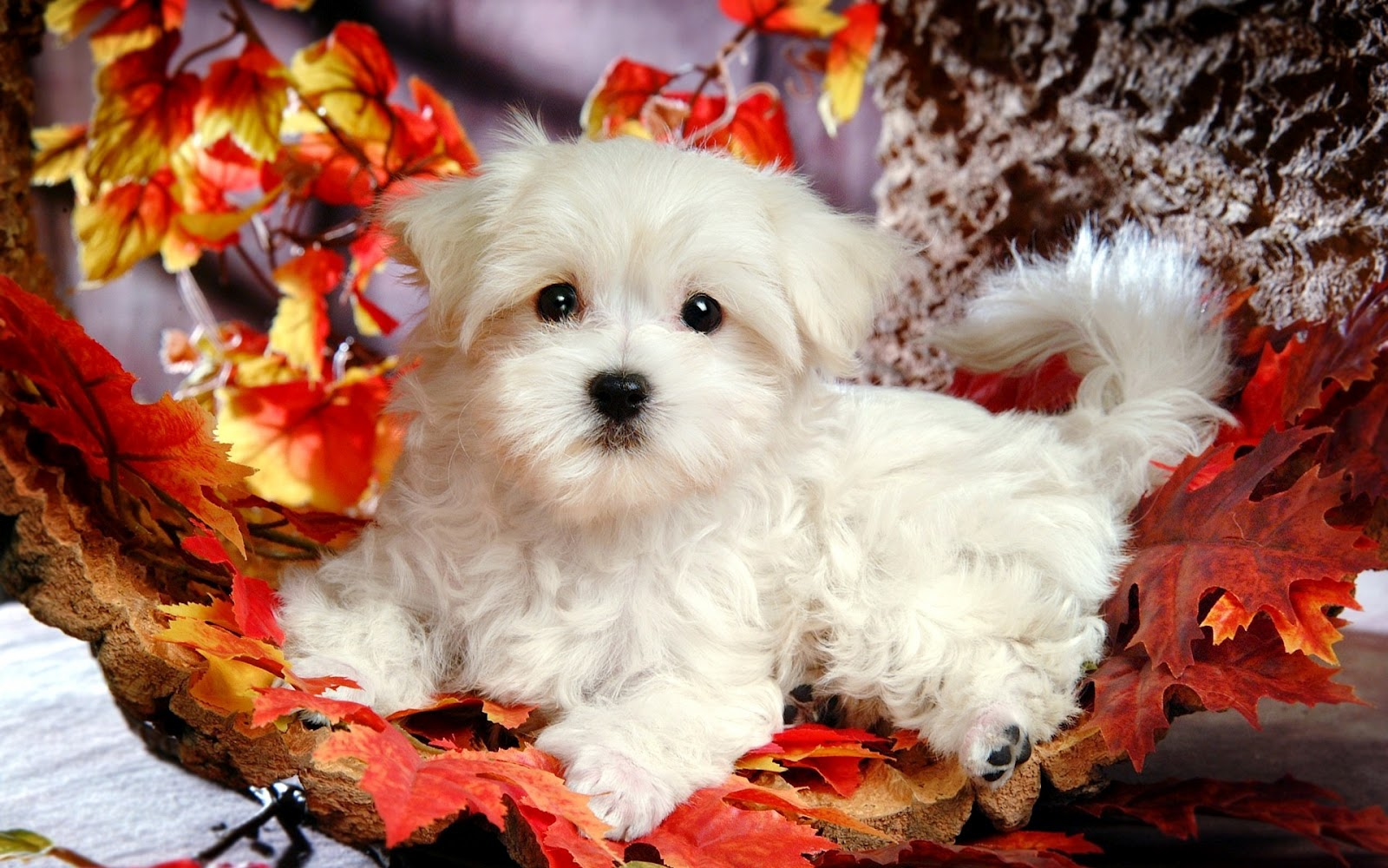 Fall Backgrounds with Puppies wallpaper 1080p