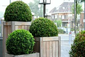 Arte topiario las plantas convertidas en esculturas for Arbustos enanos para jardin
