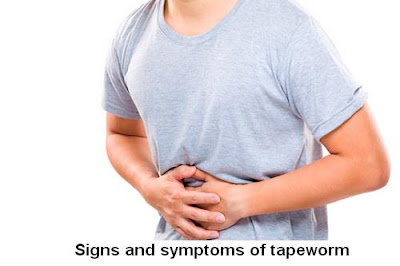 Tapeworm Symptoms: What Is A Tapeworm