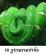 10 สายพันธุ์งูที่น่าทึ่ง