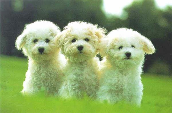 Imágenes de perritos