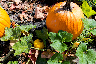 Pumpkin patch near home