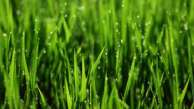 çimen lekesi nasıl çıkartılır, çimen lekesi çıkarma, çimen lekesi çıkar mı, çimen lekesi hakkında bilgi, çimen lekesi nedir, çimen lekesi, çimenlik, leke çıkarma, leke çıkarıcı, cafecik.net