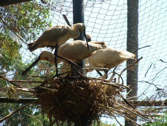 bird nest at zoo mysore