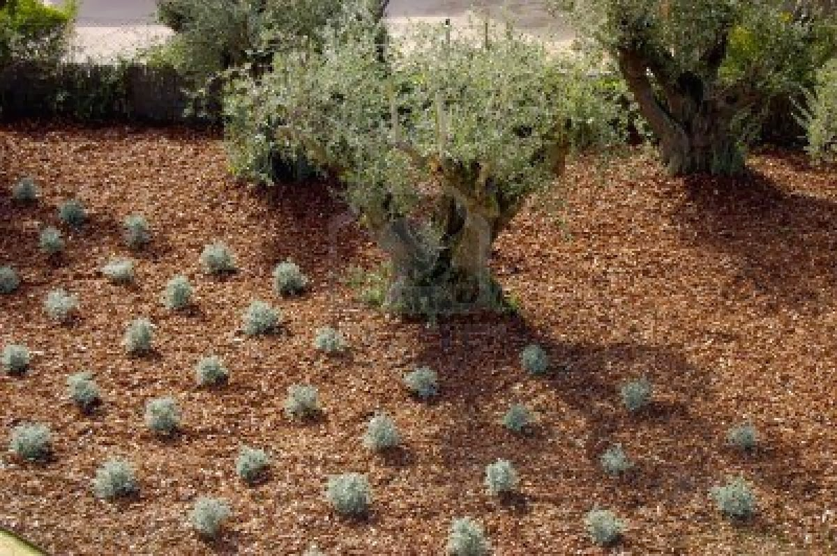 Madera de pinares arreglos para el jard n corteza de for Astillas de madera para jardin