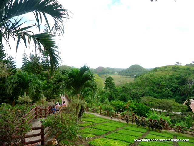 Chocolate Hills in Sagbayan Peak Bohol