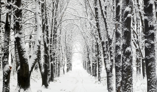 Snowy Woods by Shteuf on DeviantArt