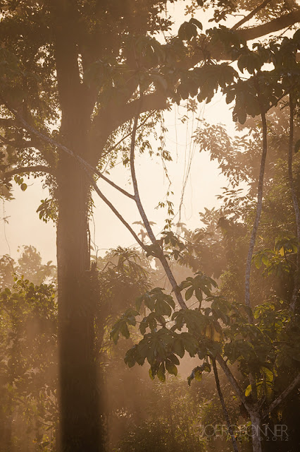 Misty morning light in the rainforest.