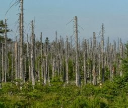Efectos nocivos de la lluvía ácida en árboles