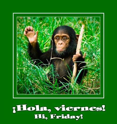 little chimp waving hello