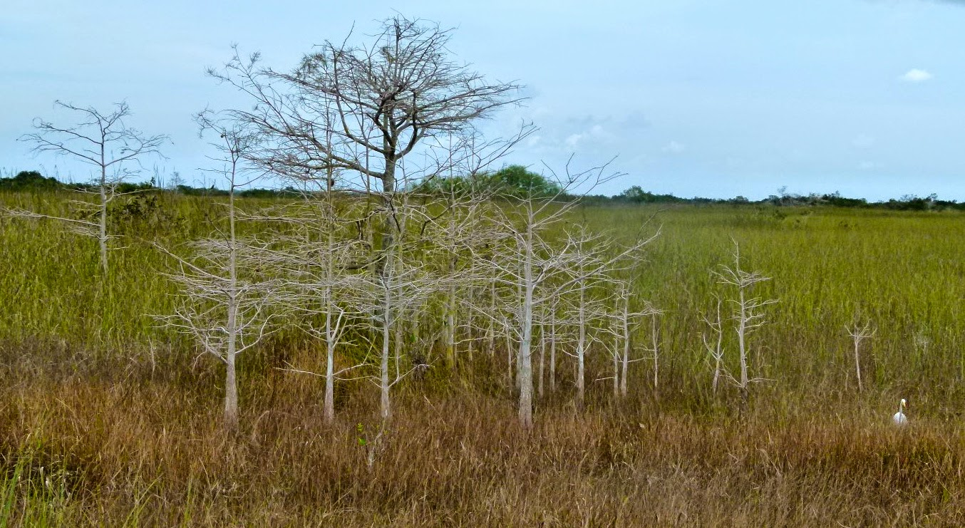 Shark Valley scenery in Everglades National Park