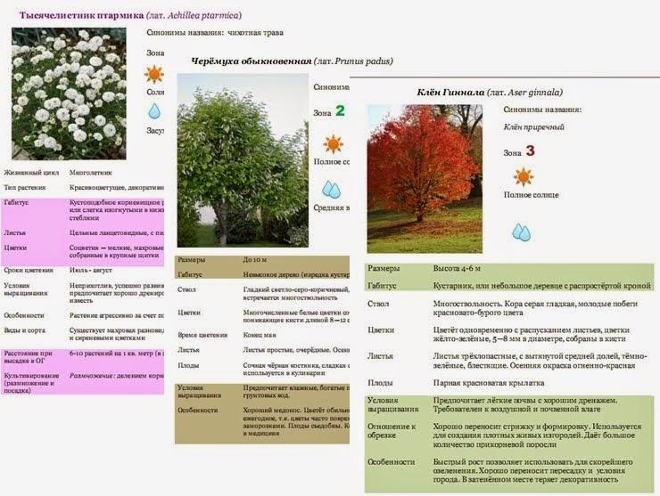 100 эффектных морозоустойчивых растений