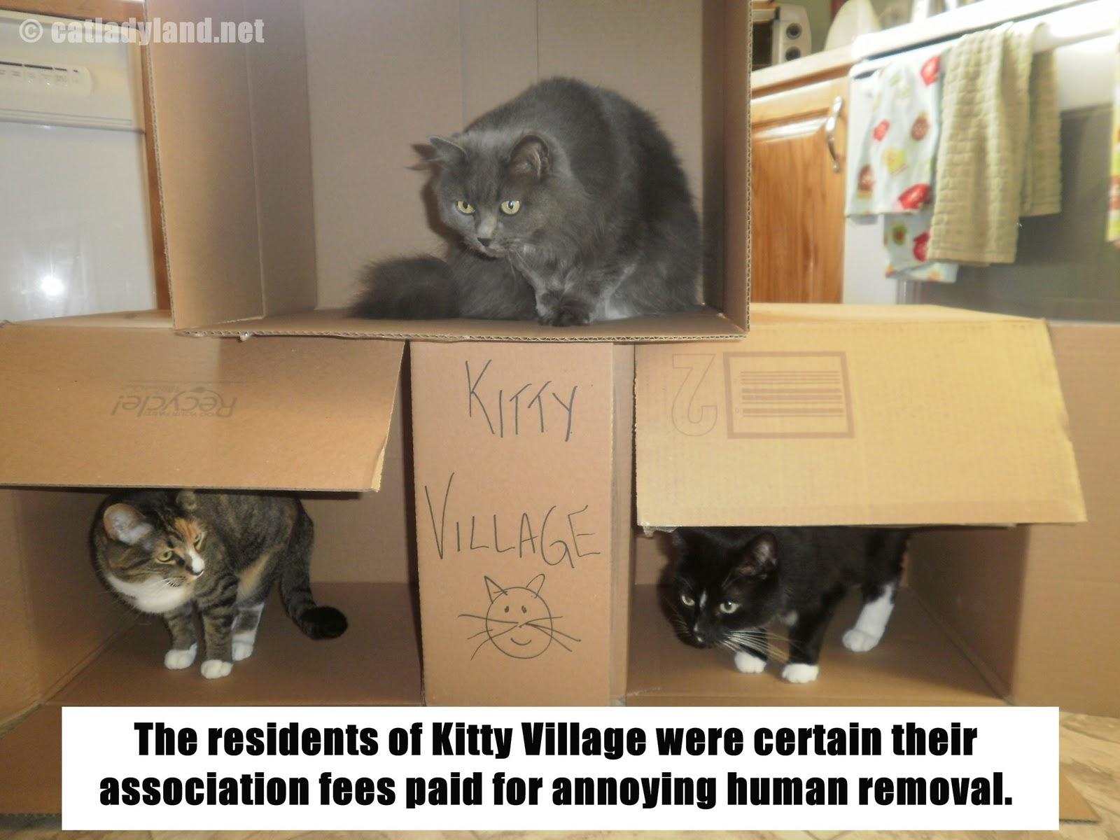 http://1.bp.blogspot.com/-Is9MSIWj1CA/TzQPbHTqa5I/AAAAAAAAn0M/pLL3oHHIuRA/s1600/Funny+Cat+Pics+(26).JPG
