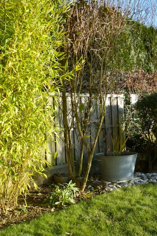 Le jardin de pacalou un jardin pour l hiver for Jardin hiver plantation