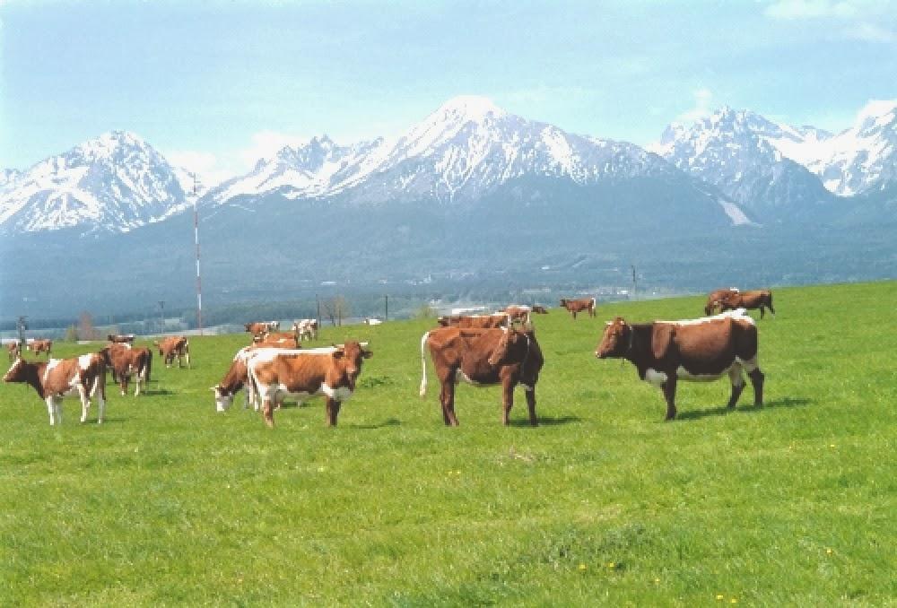 http://1.bp.blogspot.com/-Ise_UoFSgyg/UrzS1g6rS_I/AAAAAAAAAB8/7Q2fg43-0Jg/s1600/Cows_on_a_grass_field_below_the_High_Tatras_mountain__Slovakia.jpg