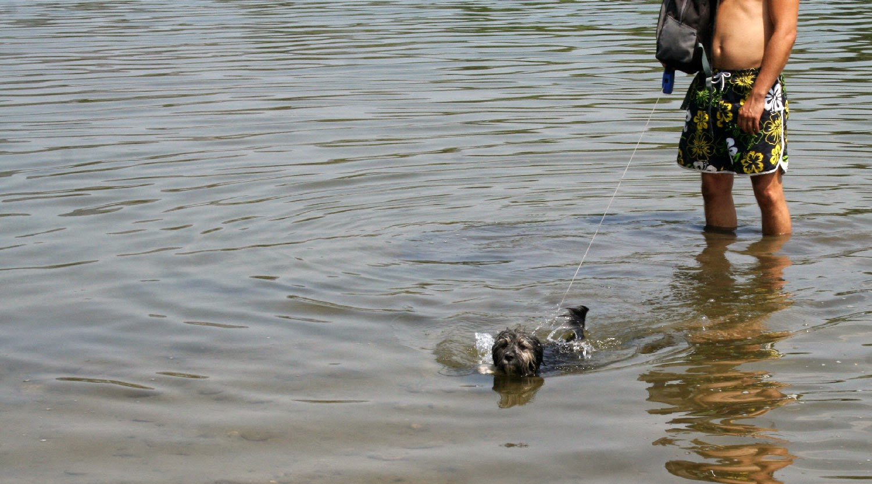Doggy paddling