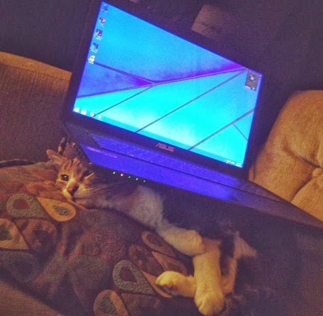 Funny cats - part 83 (40 pics + 10 gifs), cat pics, cat and laptop