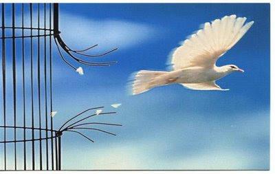 """""""Volant"""" cada dia més alt!!!"""