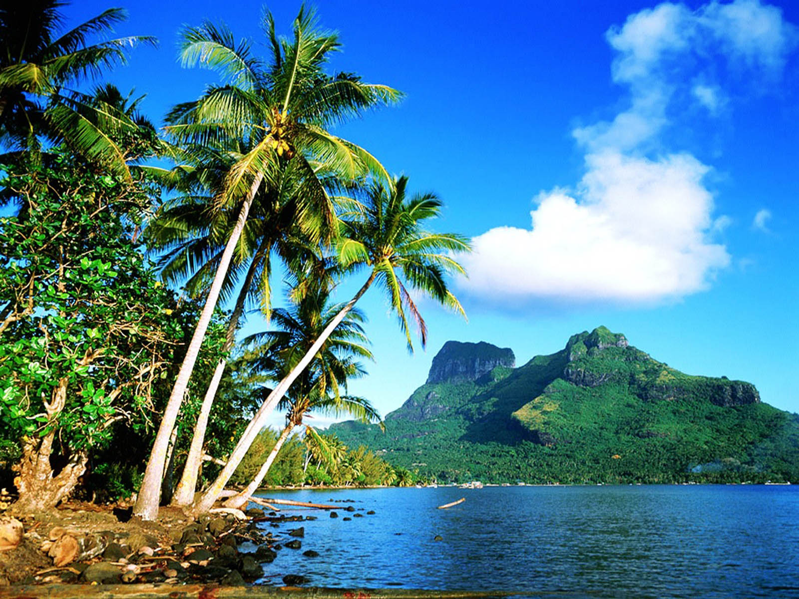 Wallpapers coconut tree wallpapers for Tropical landscape