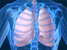 Image of transparent human body showing lungs and ribs cage.