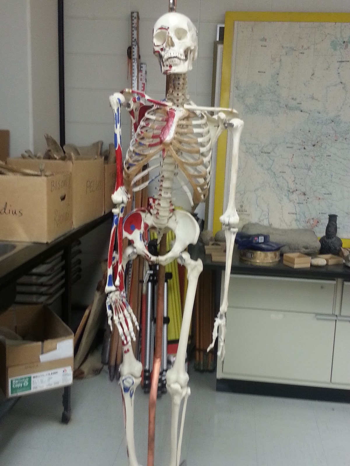 Writer of Wrongs: Forensic Fridays Part 2: Anatomy of Murder