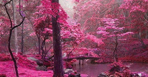 Showme Nan Pink Forest Ireland