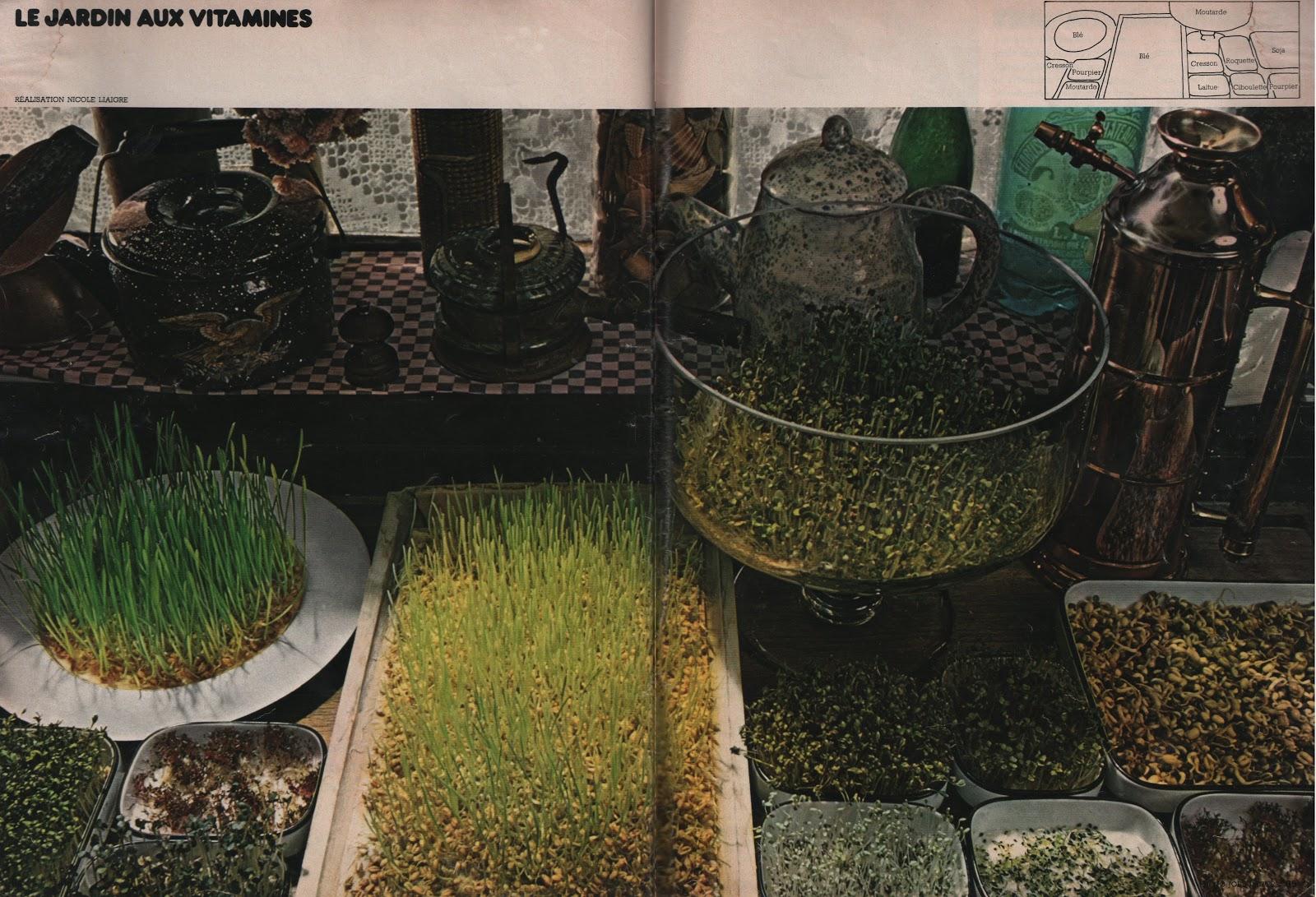 Savez vous planter chez vous le jardin aux vitamines for Le jardin aux 100 secrets