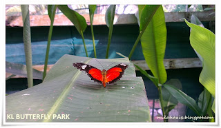 kl butterfly park review