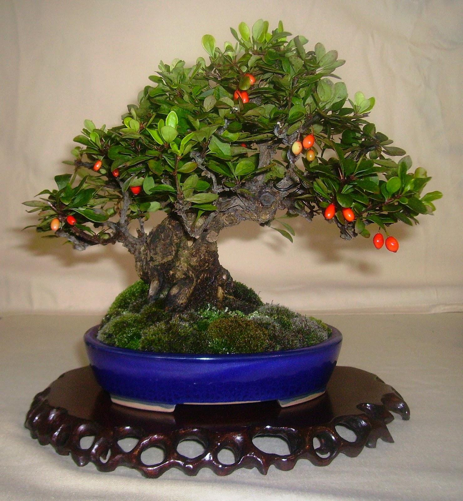 Bespoke Bonsai Stands British Shohin Association Display At The