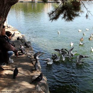 Familia alimentando gaviotas en el Parque Ohori de Fukuoka