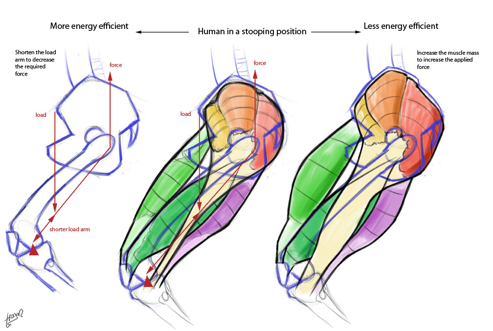 Anthro Anatomica: Anthro-grade stance