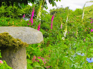 Foxgloves Flower Bed
