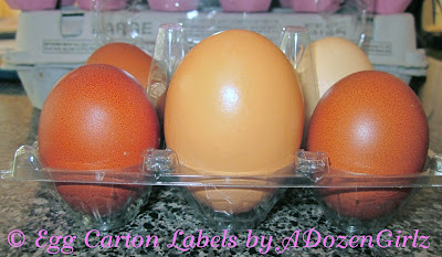 How a Hen Makes an Egg & Egg Oddities: Gigantic eggs