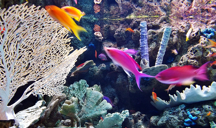 Tropical Fish Aquarium of The Pacific