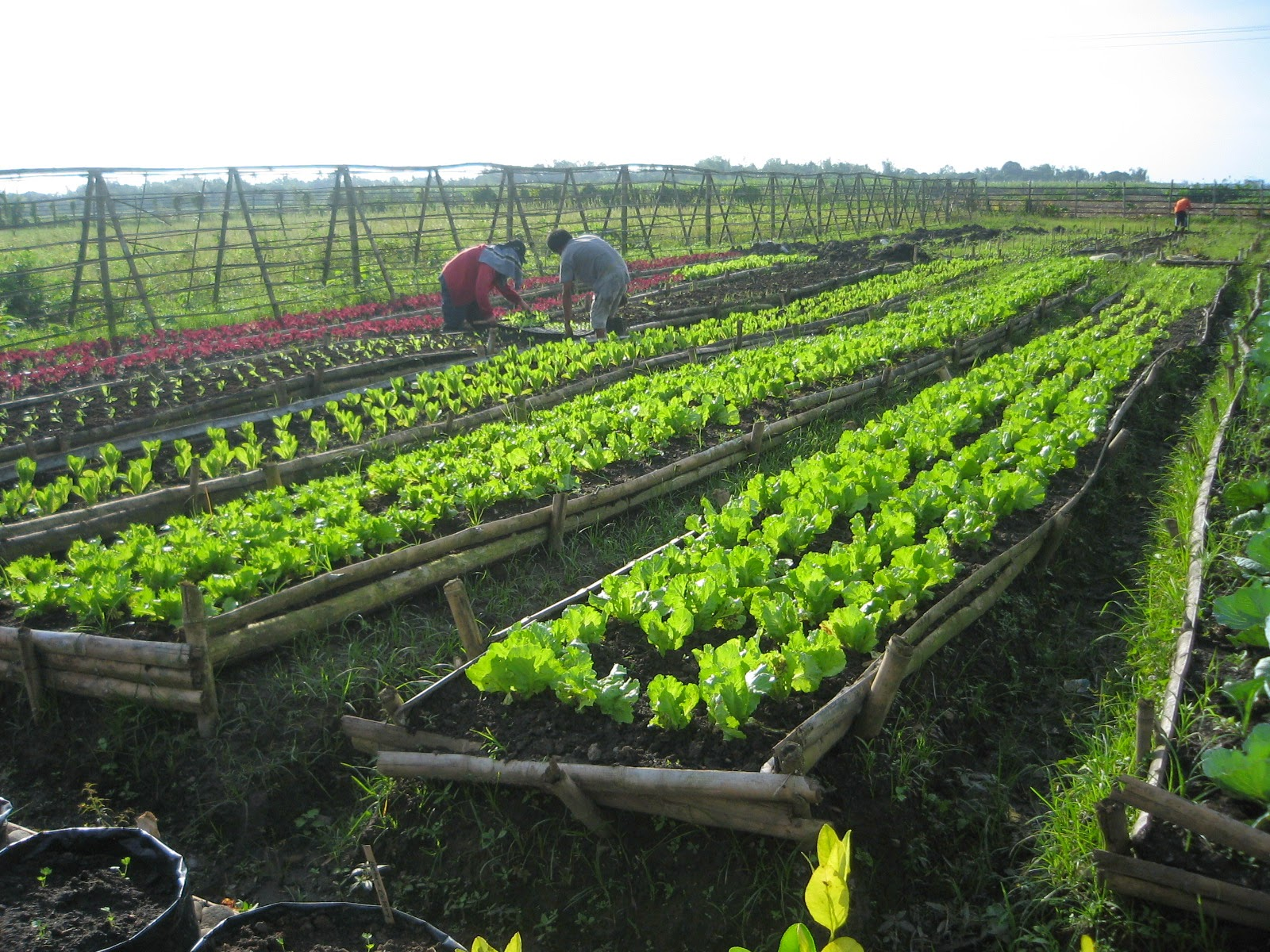 organic farming successful in western visayas ~ organicfarming.ph