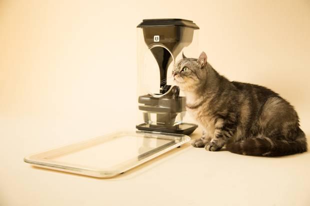 Bistro, Smart Auto Cat Feeder