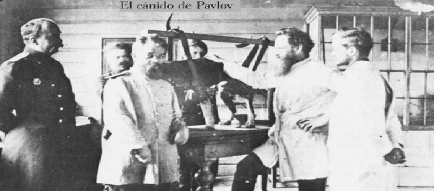 El cánido de Pavlov