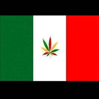 leis sobre marijuana na italia - semi marijuana
