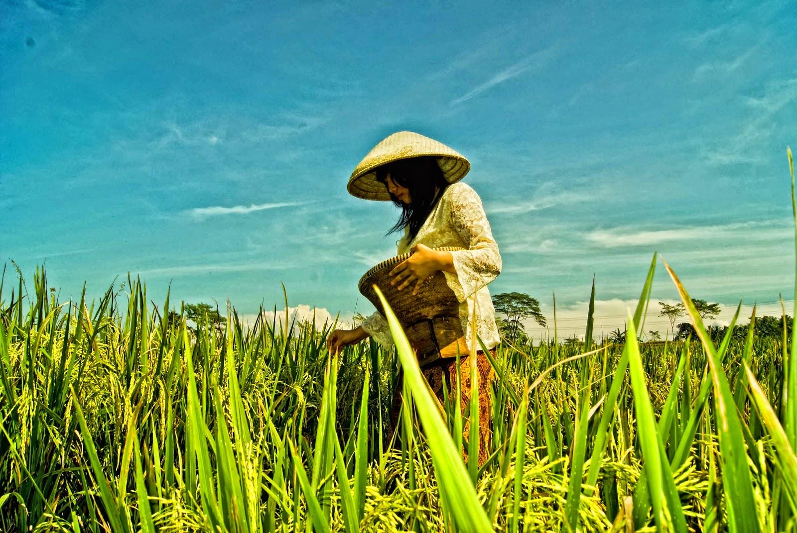 Ini Ancaman Bagi Pertanian Indonesia