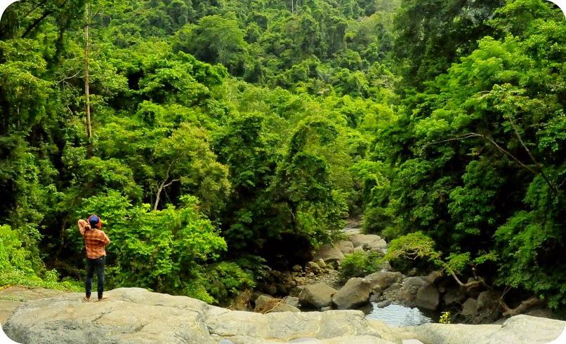 Hijaunya Hutan Sekongkang