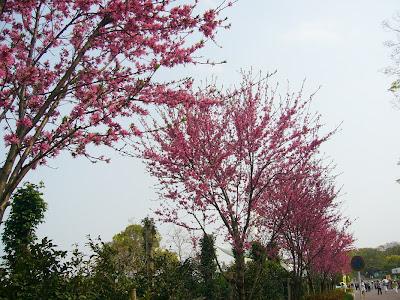 万博記念公園・日本庭園 キクモモ