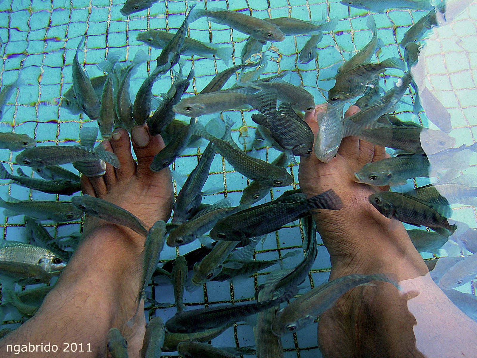Photo blog doctor fish for The fish doctor